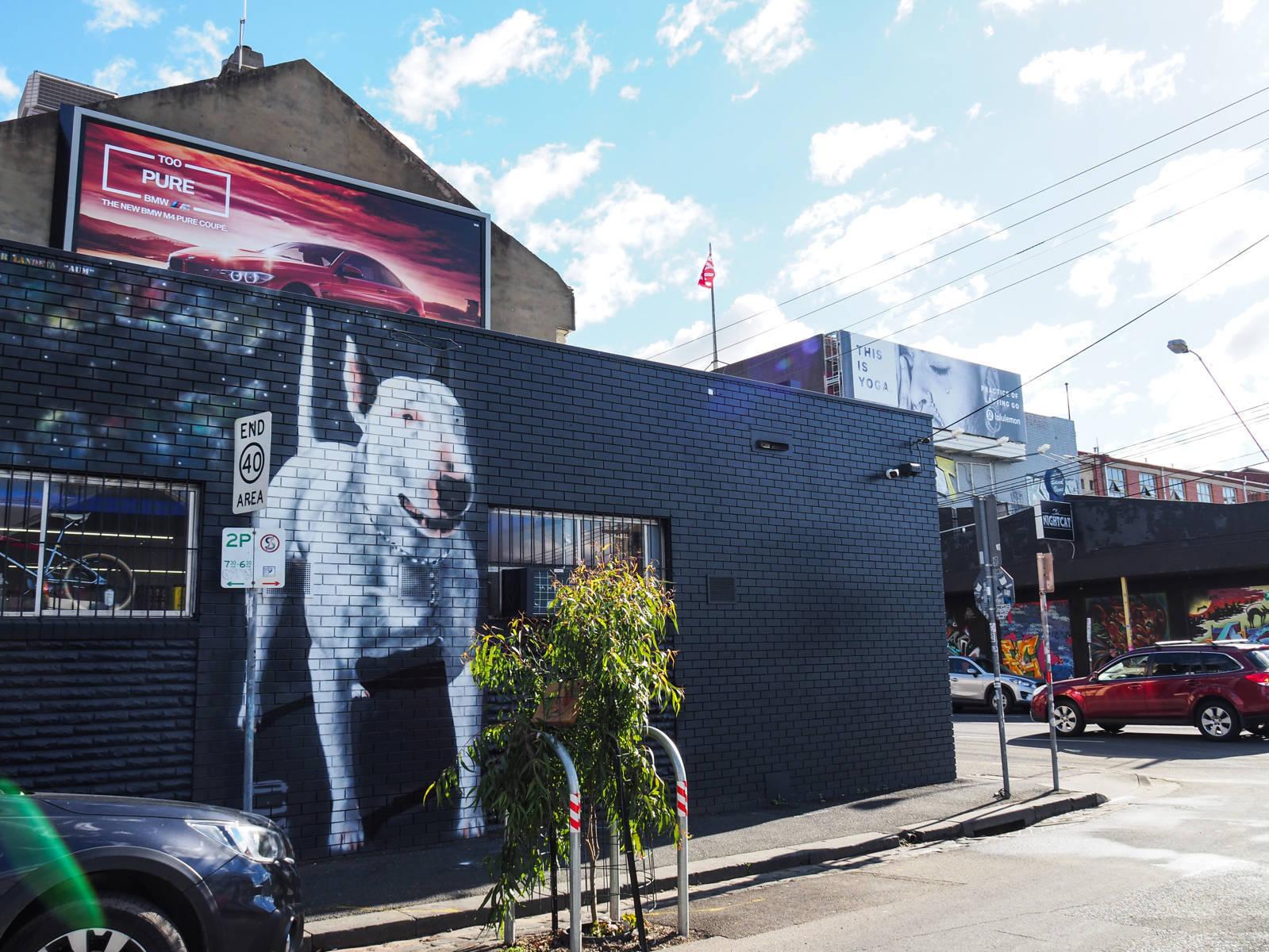 Melbourne tag dog